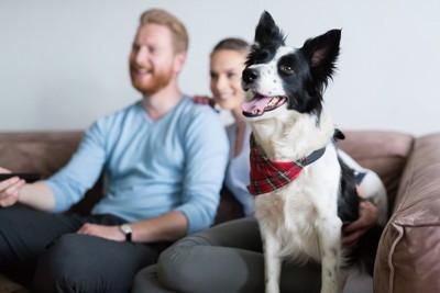 テレビを観るカップルと犬