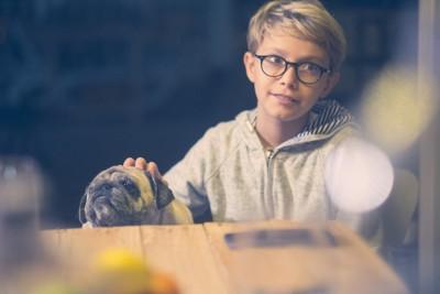 パグを撫でる眼鏡をかけた男の子