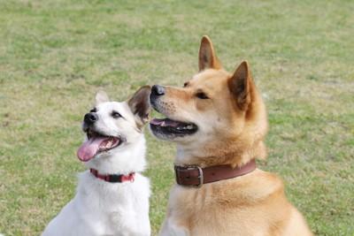 同じ方向を見つめる二匹の犬