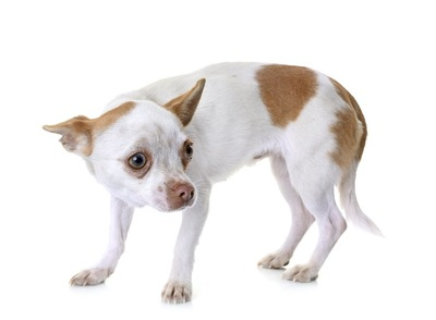 身を縮めて怯えている犬