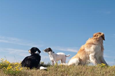 空を見つめる犬たち