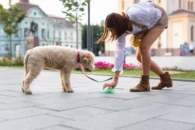 散歩中に犬のウンチを拾う飼い主