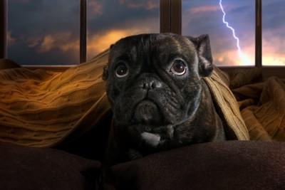 雷に怯える犬