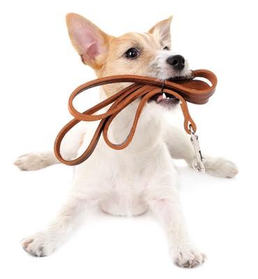 リードをくわえた犬