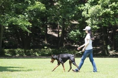 ドーベルマンと散歩する女性