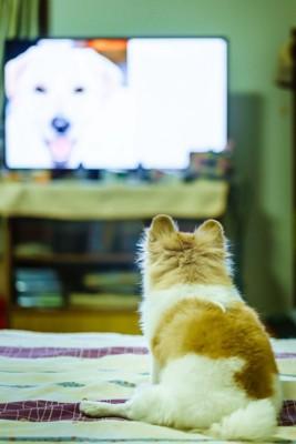 画面の中の犬を見つめる犬の後ろ姿