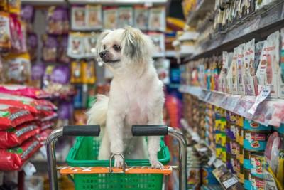 ペットショップでショッピングカートに入った小型犬