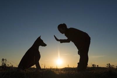 座る大型犬と指示を出す女性のシルエット