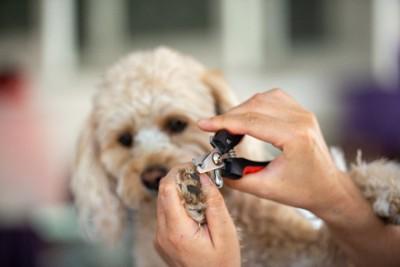 爪切りする犬