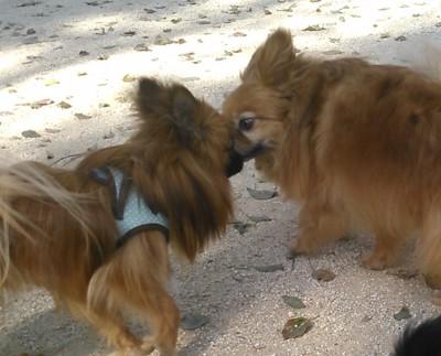 犬が犬の口をなめようとしているところ