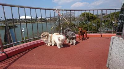 海と犬たち