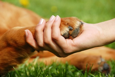 女性の手に置いた犬の前足