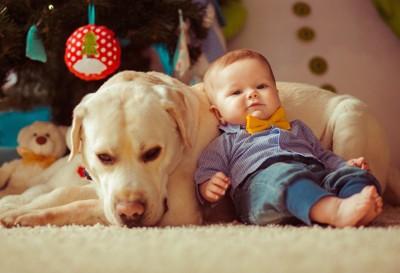 犬に体を預ける赤ちゃん