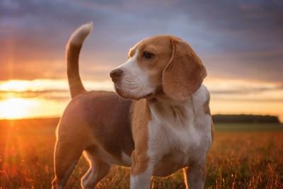 しっぽが絶好調な犬