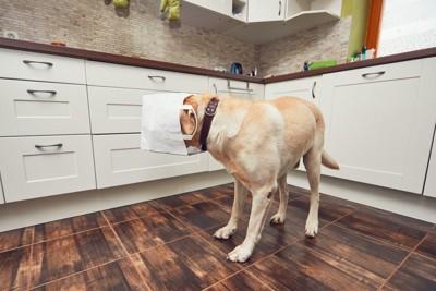 犬の顔に白い紙袋