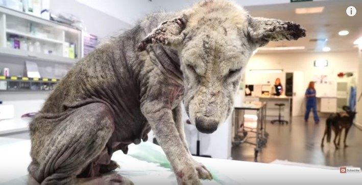 診察台の上の母犬