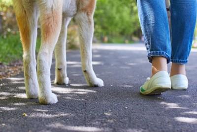 並んで歩く犬と飼い主の足