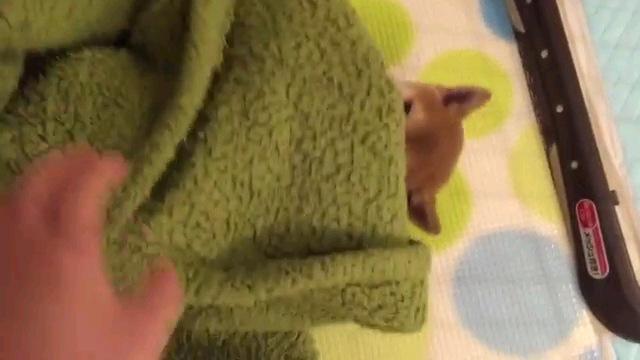 毛布掛ける