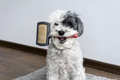 ブラシを加える犬