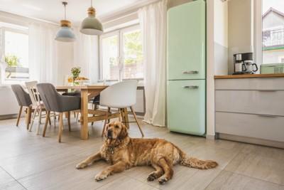 冷蔵庫の前で伏せて寛ぐ犬