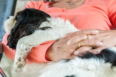 女性のひざで寝る犬