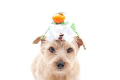 頭に鏡餅を乗せた犬