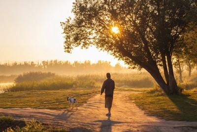 分かれ道を散歩中の犬と飼い主