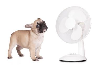 扇風機と子犬