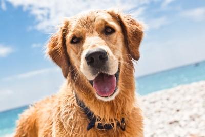 背景の青い空と犬