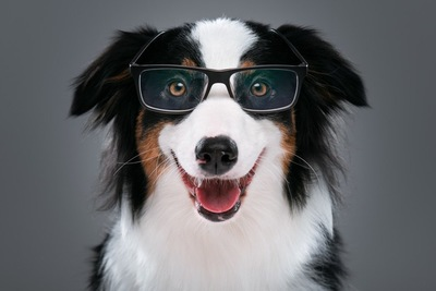 眼鏡をかけている犬