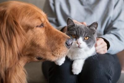 犬と猫と人間
