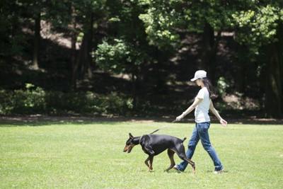 ドーベルマンと歩く女性