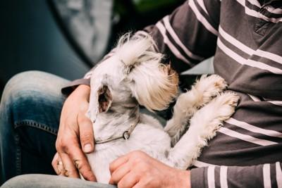 人の腕にくっついている犬