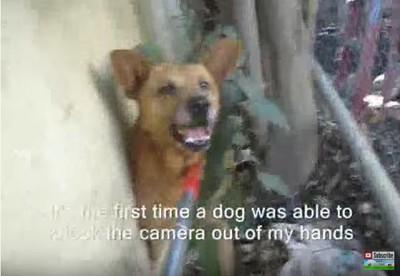 つかまった犬