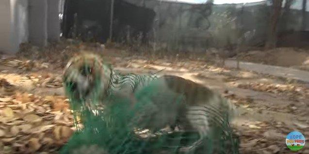 網でつかまった犬