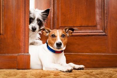 玄関から顔を覗かせる2匹の犬
