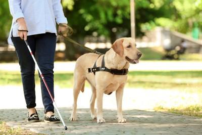 女性と歩く盲導犬