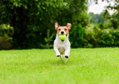 ボールを持ってくる犬