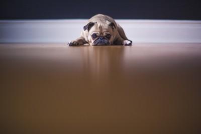 ぐったりとした犬