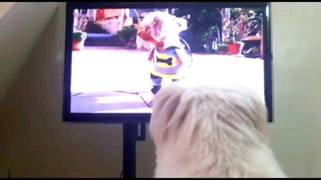 テレビ見る犬の後ろ姿