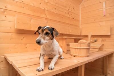 温泉の道具と犬