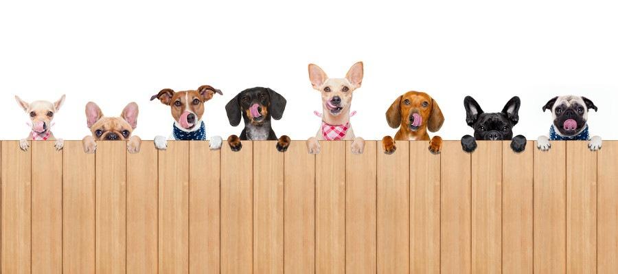 舌を出した様々な犬種