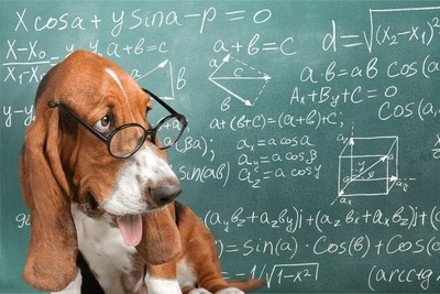 数式の書かれた黒板と犬
