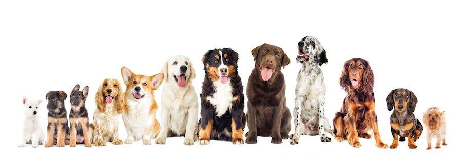 横に並んで座る様々な犬たち