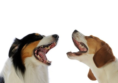 会話しているように見える二匹の犬