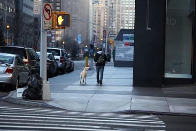 信号機と犬を連れた人