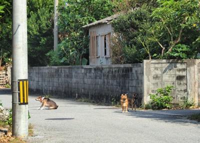 放し飼いの犬3頭