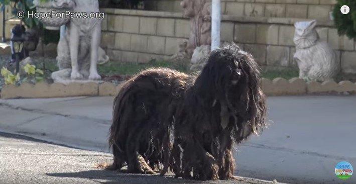 道路に立つ犬