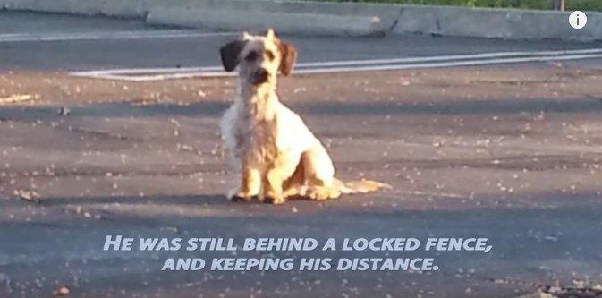 駐車場に座る犬