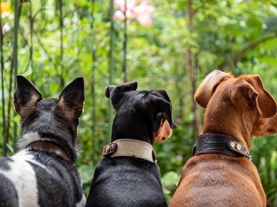 2匹の犬と戯れる男性